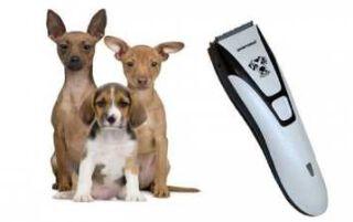 Тример для собак — як вибрати відповідний інструмент за типом і призначенням